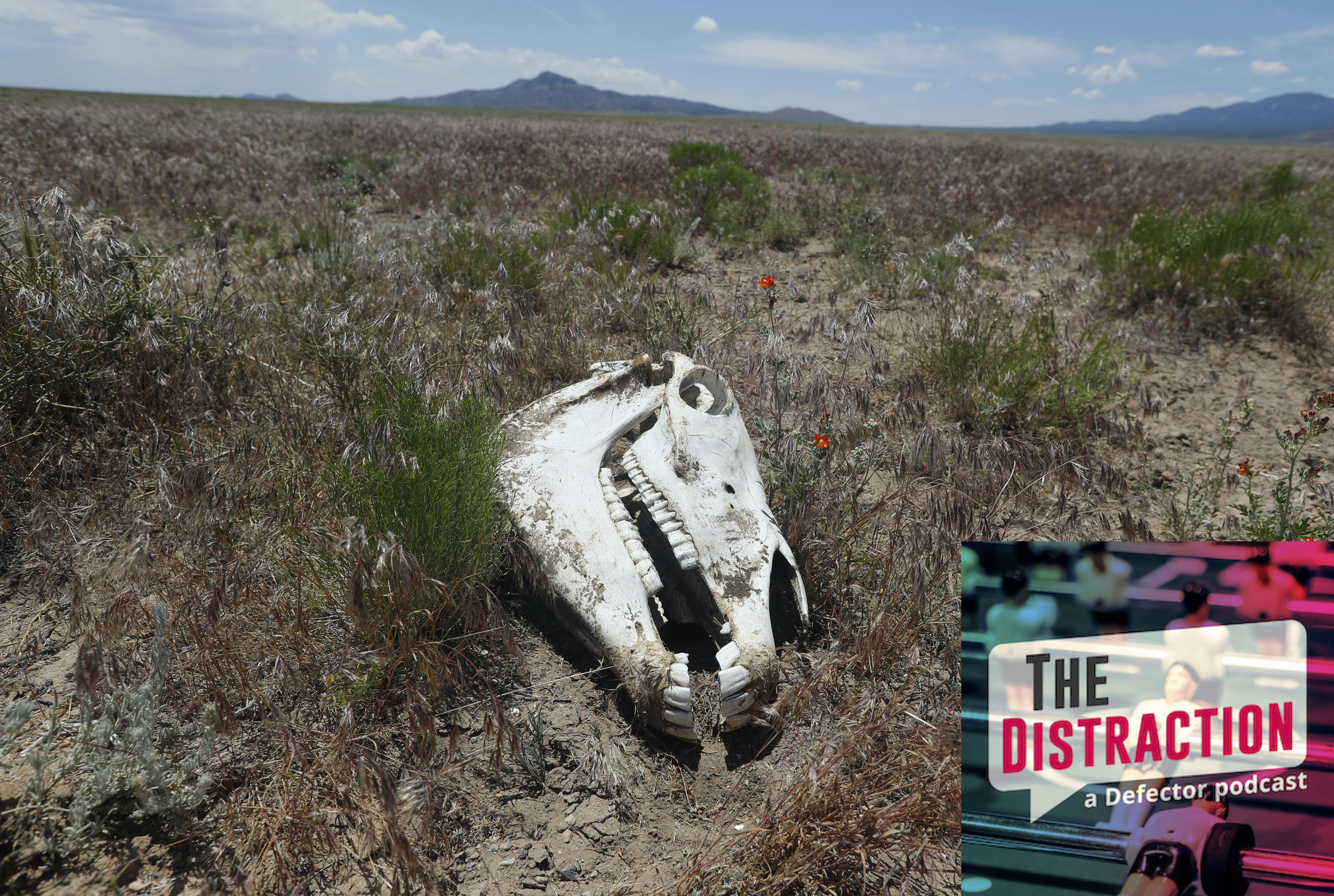 A wild horse's skull sitting on federal land. It's a whole thing, don't worry about it.