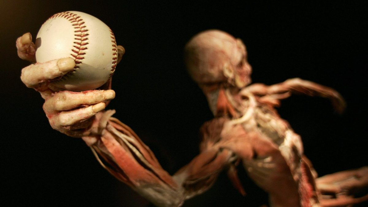"""A human cadaver positioned as if throwing a baseball at """"Bodies...The Exhibition""""."""