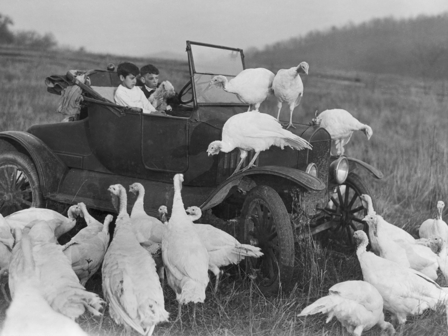 Boys in a car surrounded by turkeys.