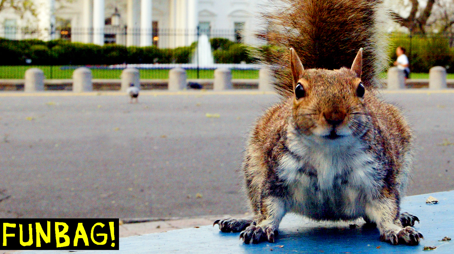 WASHINGTON: A hungry ground squirrel that looks pretty well fed hunts for food in Lafayette Park across from the White House early 10 April, 2002 as the sun starts to rise over the Washington, DC, area. AFP PHOTO Paul J. Richards (Photo credit should read PAUL J. RICHARDS/AFP via Getty Images)