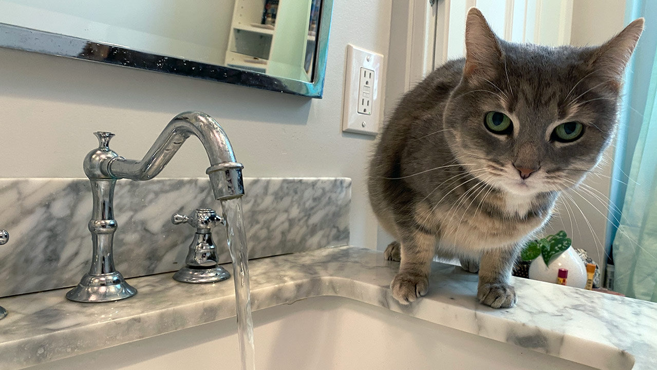 My cat, on the rim of a sink, next to a running faucet