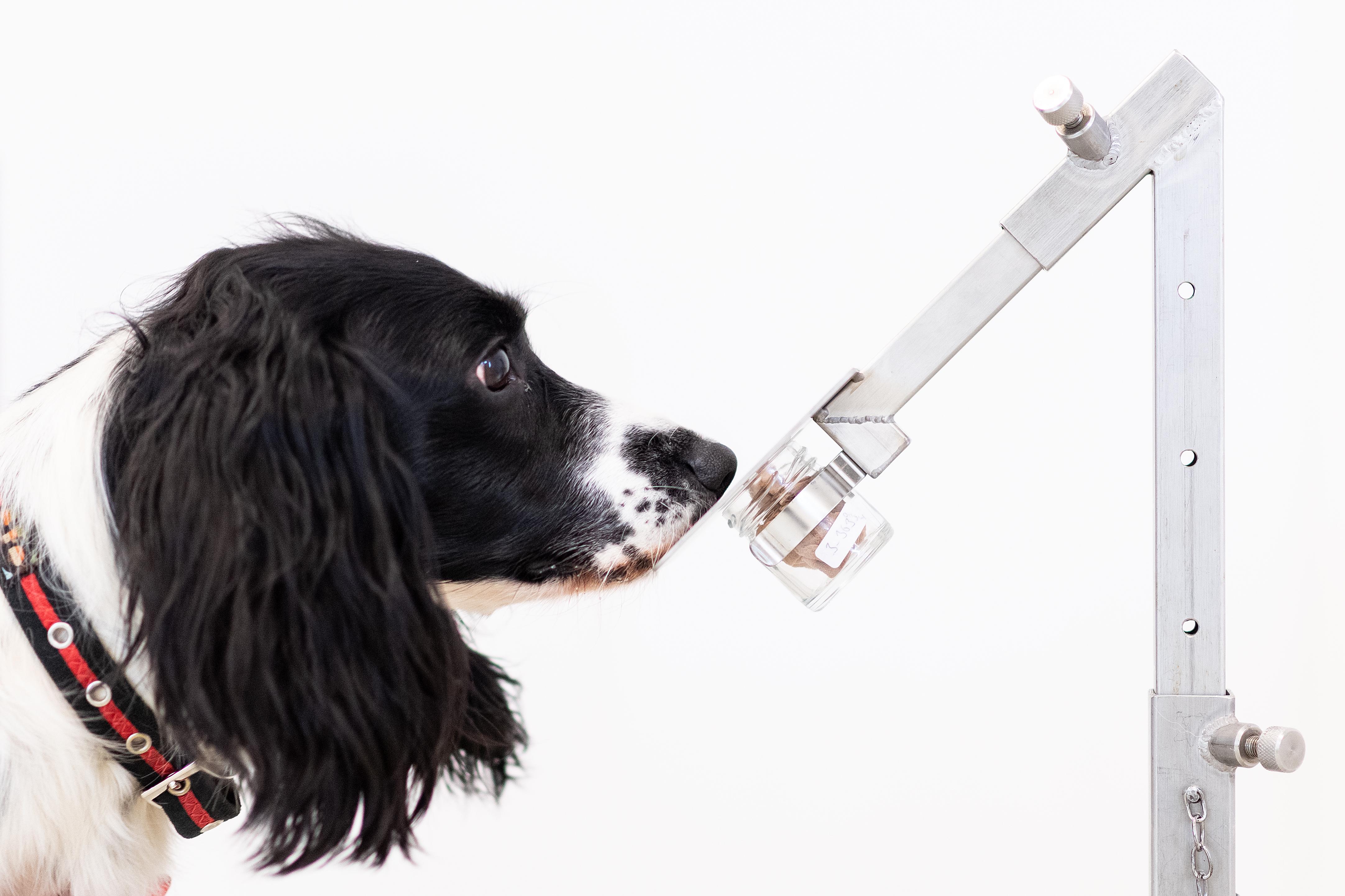 virus-sniffing dog