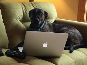 My dog Dot, blogging