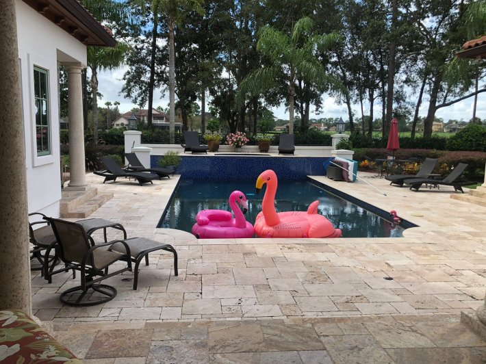 Urban Meyer's backyard swimming pool, with big inflated flamingos floating in it